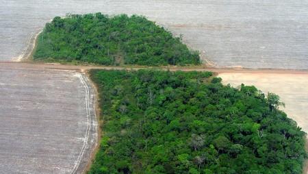 Entwaldung im Amozonasbecken (Mato Grossom, Bild: Pedro Biondi, Quelle: Wikipedia)