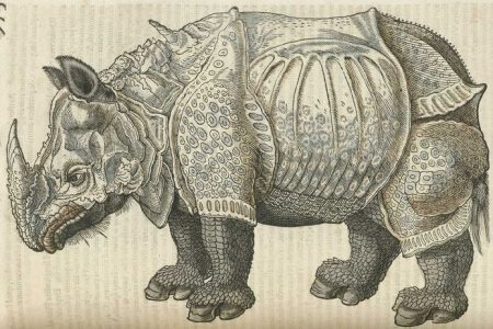 Gessners Rhinozeros in Historia animalium