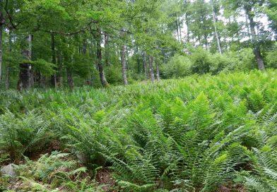 Die Geschichte vom Nutzen und Schützen des Waldes